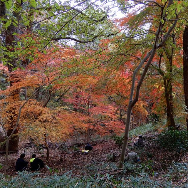 神戸の森林(もり)を守り育てる(太子の森)