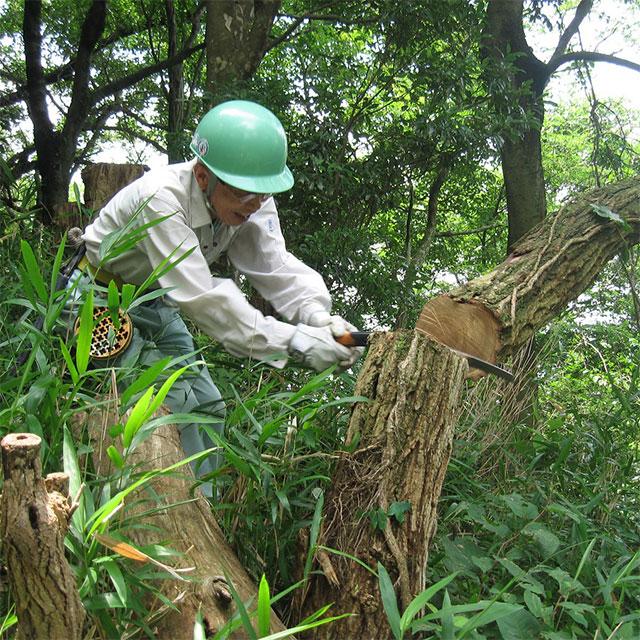 神戸の森林(もり)を守り育てる(布引・世継山)